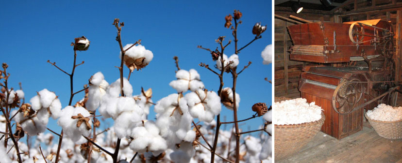 cotton and cotton gin