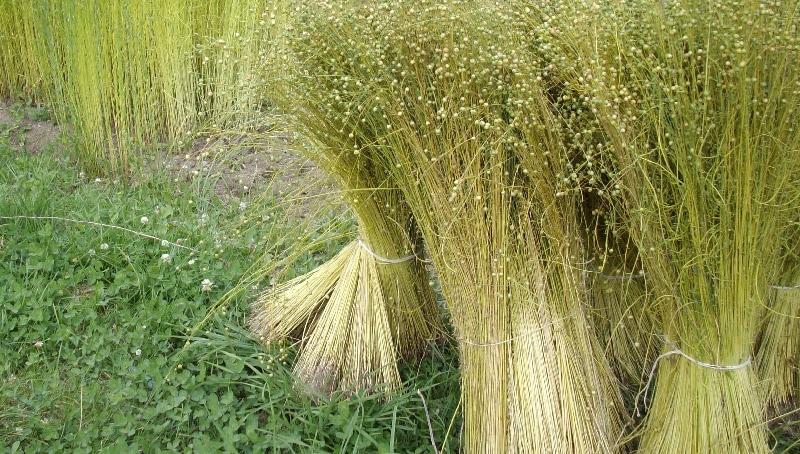 flax linen fibre