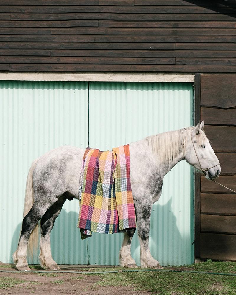 The Mungo Vrou-Vrou blanket in magenta on Percheron Horse in front of barn doors