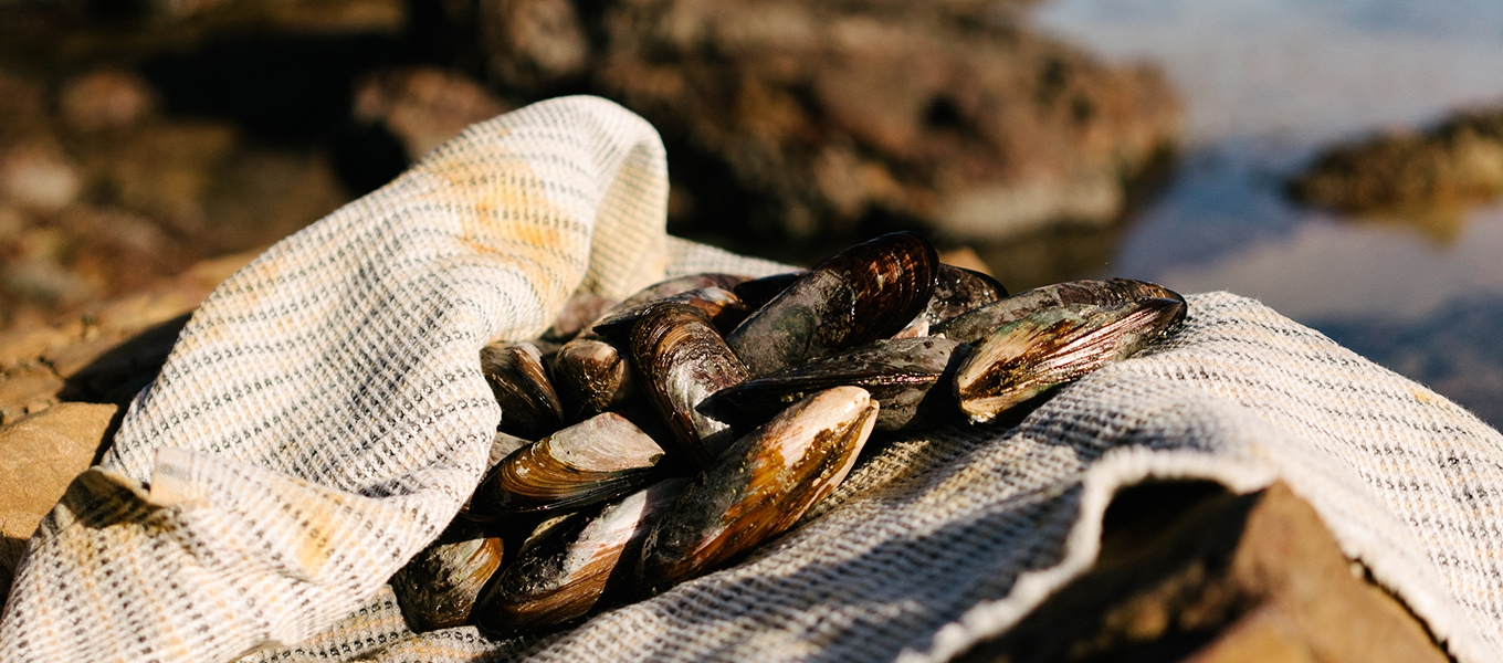 Foraged mussels on Mungo man cloth in Plettenberg Bay, Garden Route