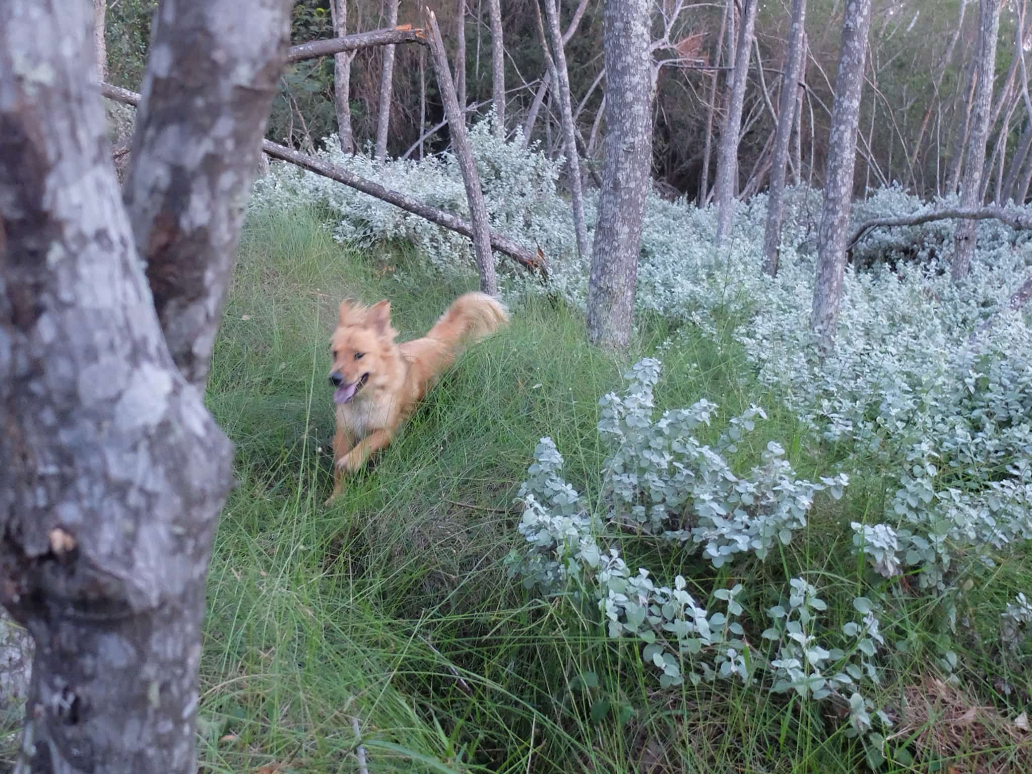 A walk in the forest is never complete without a dog or two