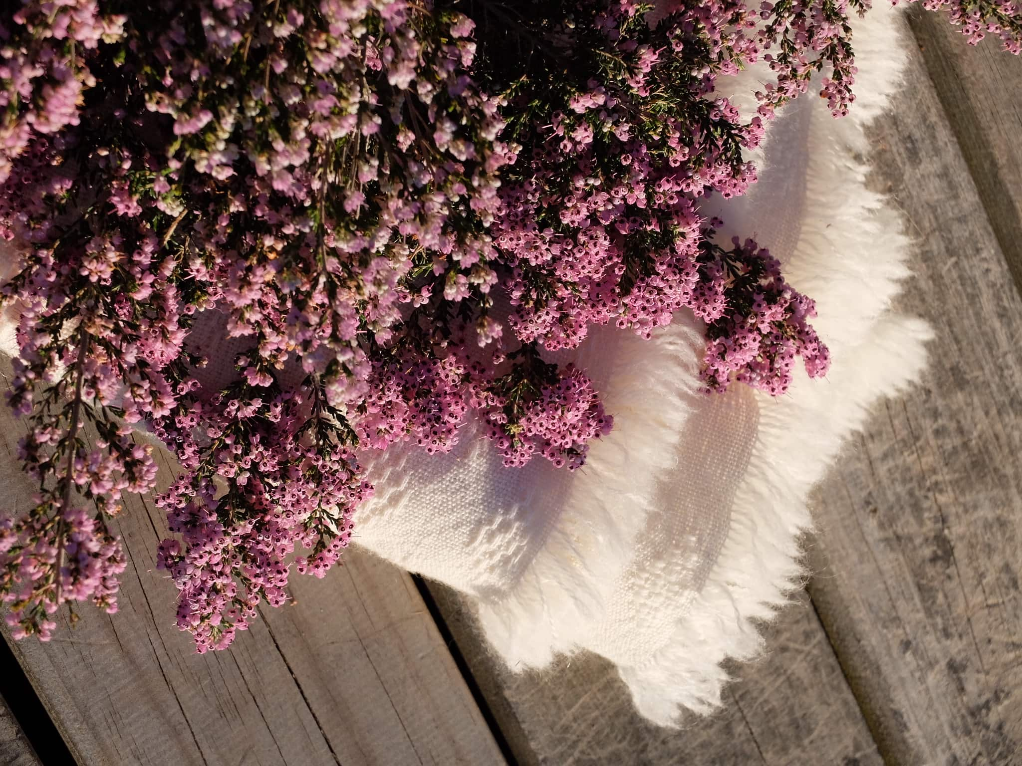 Heather or 'Erica' was used to dye the Erica Kenza scarf colourway