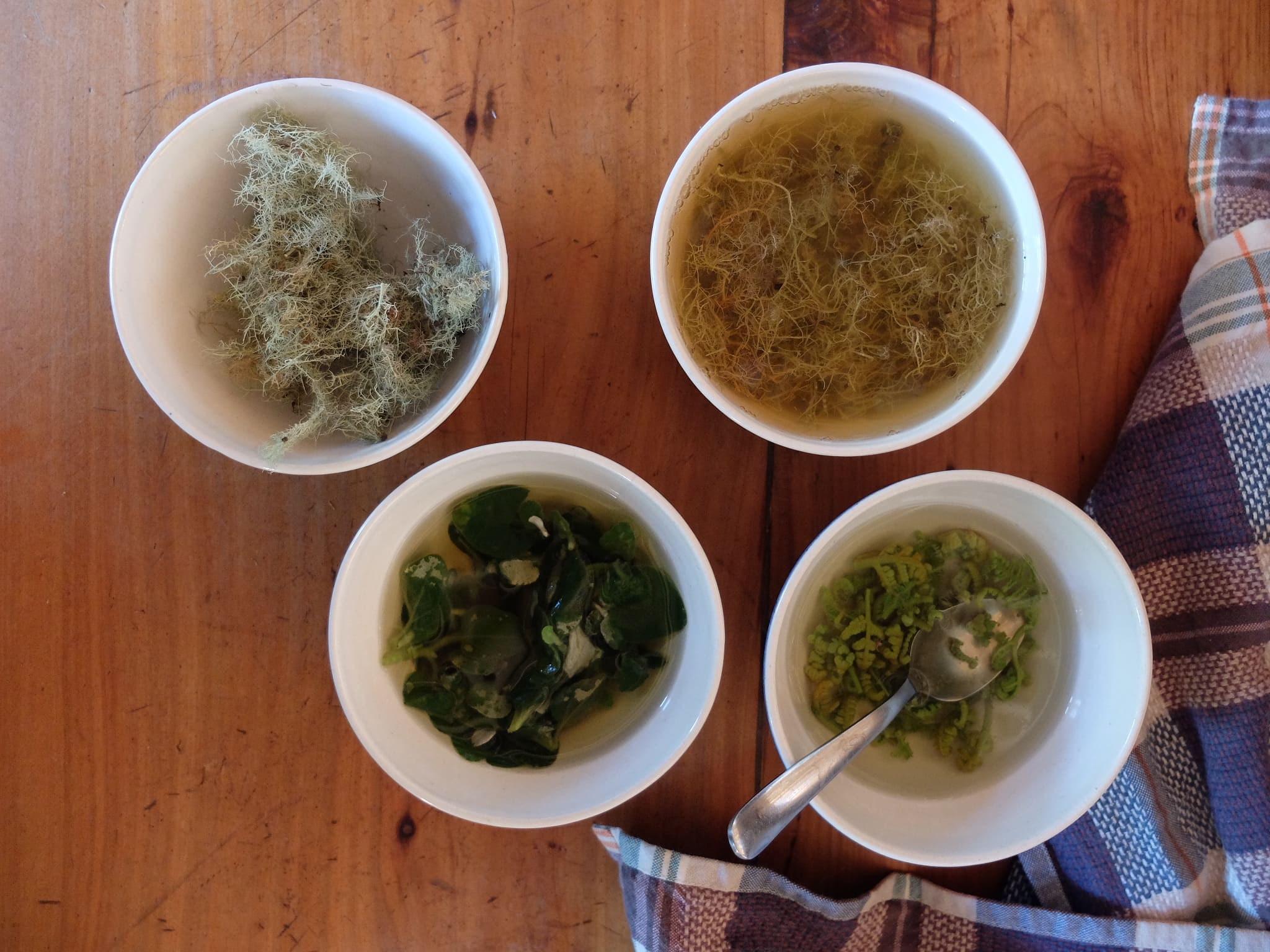 Natural Dye tester pots containing ingredients sourced from the forest