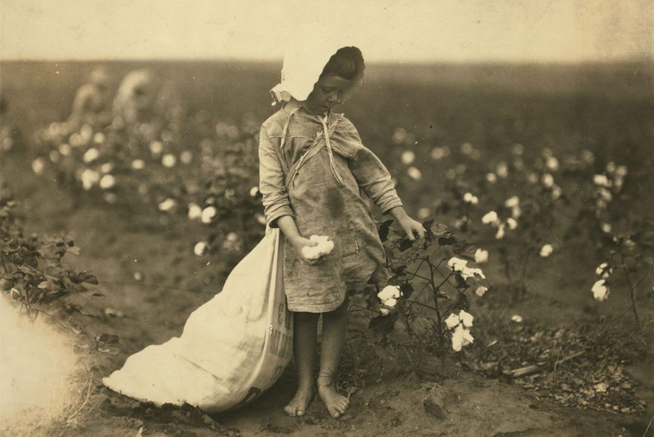 A 5 year old girl picking cotton in Oklahoma, USA, in 1916. Photograph by Lewis Hine.
