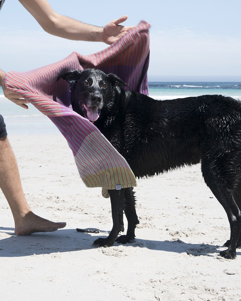 Mungo Mohala Dog Blanket in Baobab drying off a pet at the beach