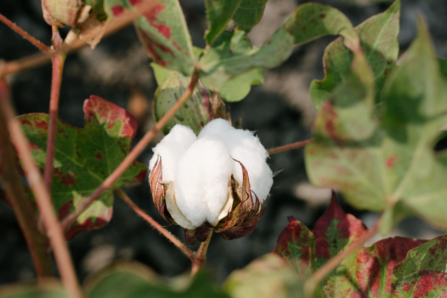 Mungo goes in search of organic cotton in Turkey