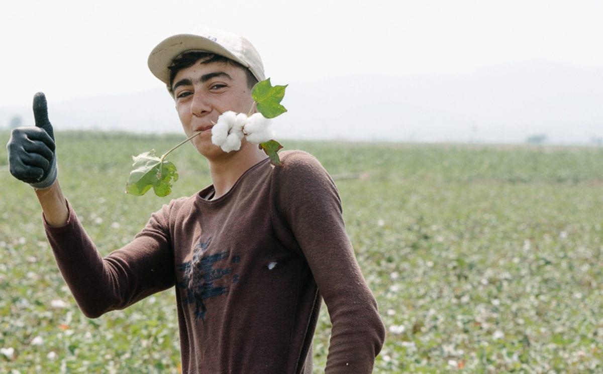 A worker handpicking in an organic cotton field in Turkey